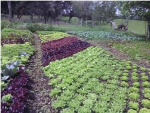 agroecologia1