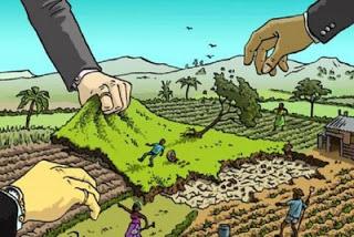 large_acaparamiento-de-tierras